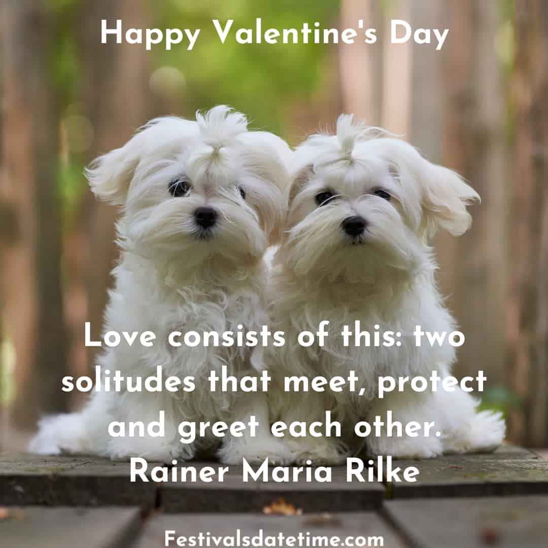 valentines_day_quotes_with_dogs